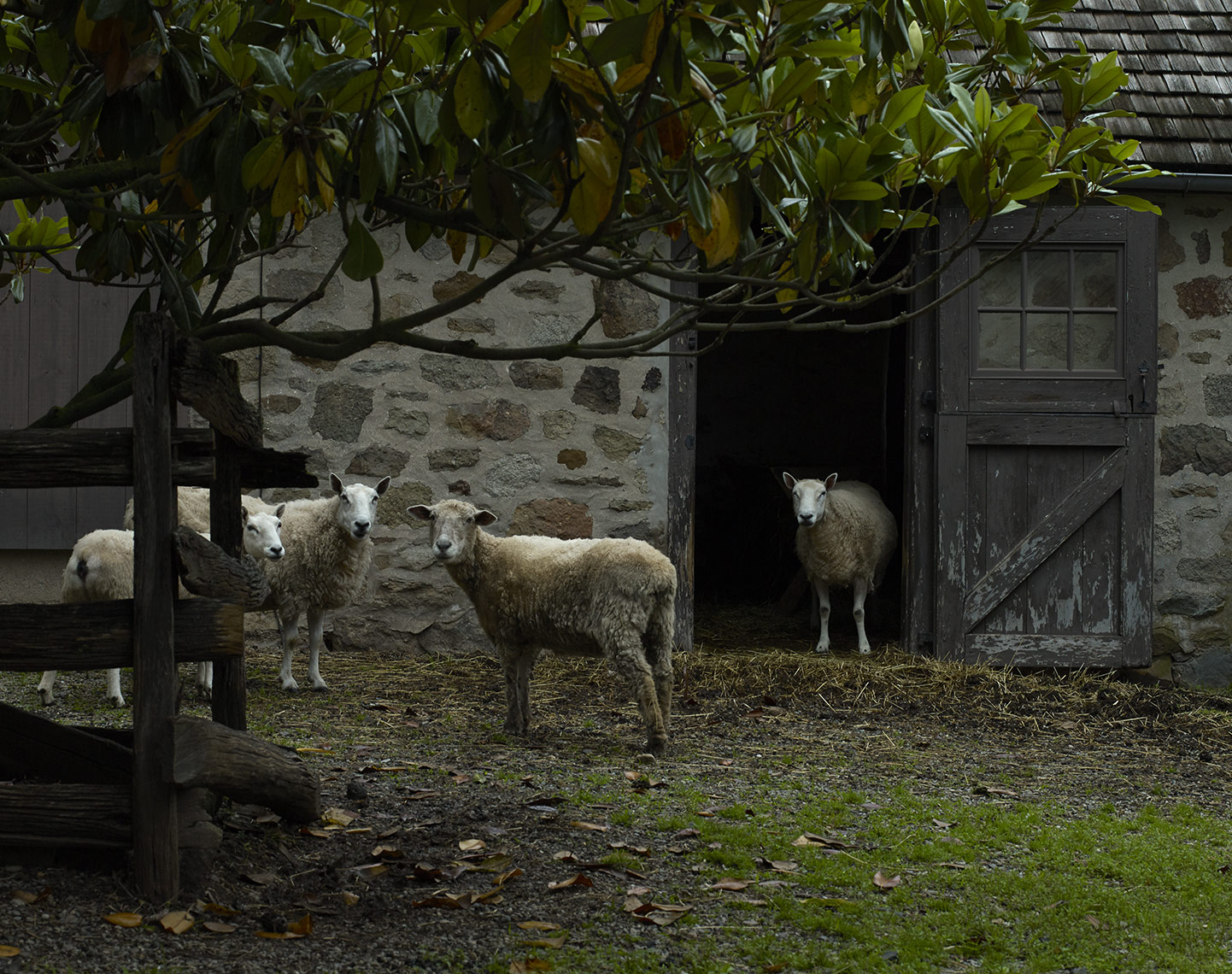 Sheep_OldeHope-crop
